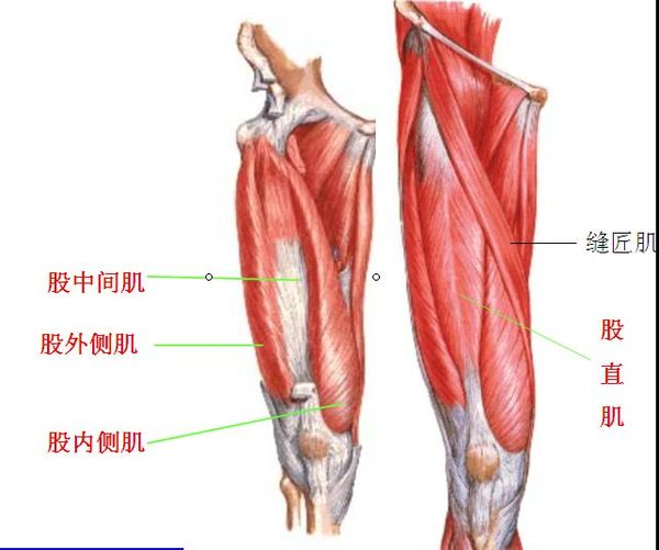 再談膝前痛:它與四頭肌1